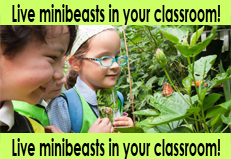 Mini Beasts Education Shows